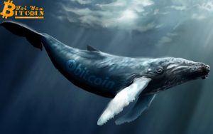 """Famous Bitcoin """"whales"""" in the crypto market"""