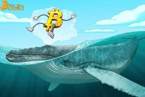 Bitcoin Whales Hit 2-Year High as Investors Reflect on 2016 Halving