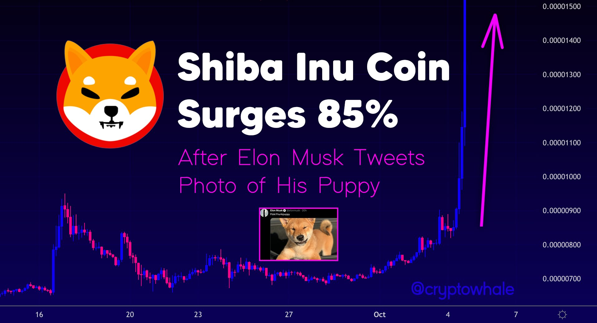 Elon Musk posted a photo of a dog sitting on Tesla, Shiba Inu (SHIB) increased by 85% - What secret does Musk have?